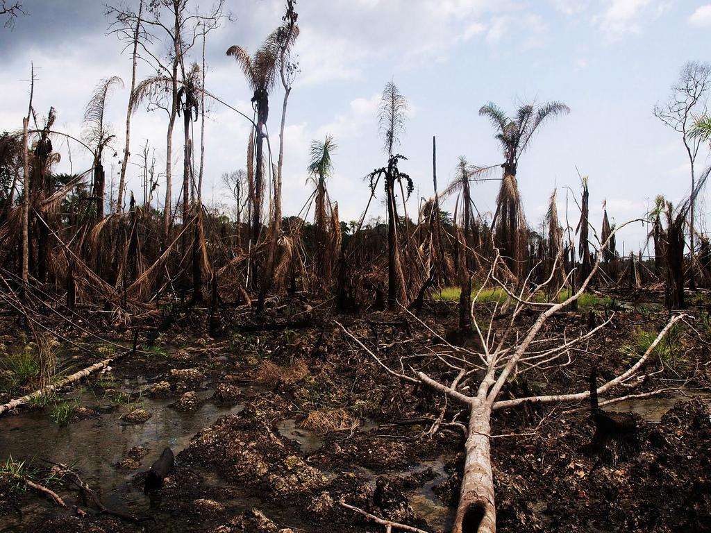 Niger Delta (1)